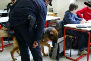 Scuola, in classe arrivano i controlli con i cani antidroga