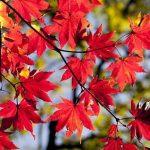 Equinozio d'autunno: Google ci ricorda la fine dell'Estate