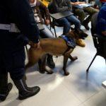 Avellino: Blitz dei Carabinieri a scuola, trovata Droga nei bagni e nelle aule